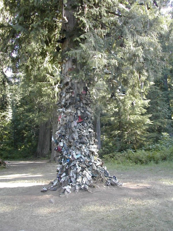 Christmas Shoe Tree.The Shoe Tree Of Northeast Idaho